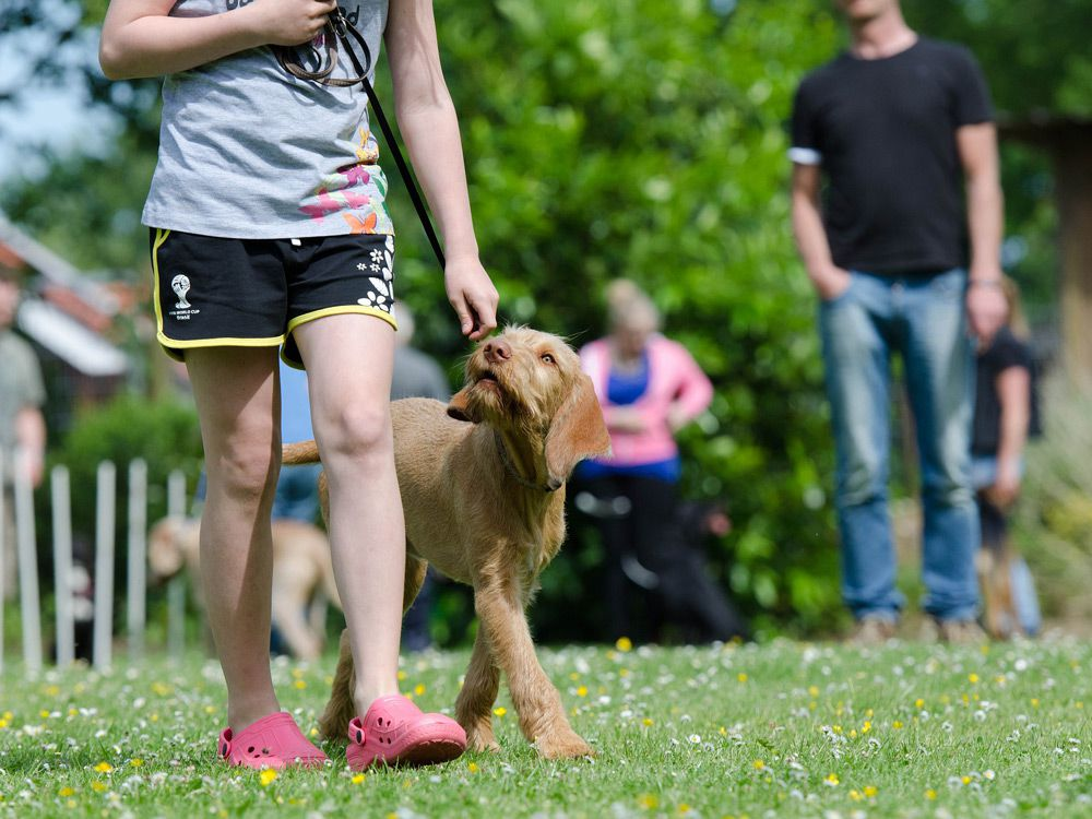 Dog training with a girl